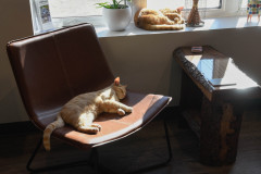 Our Construction cats getting some afternoon sun.