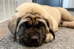New Bailey Homes dog Big Earl!
